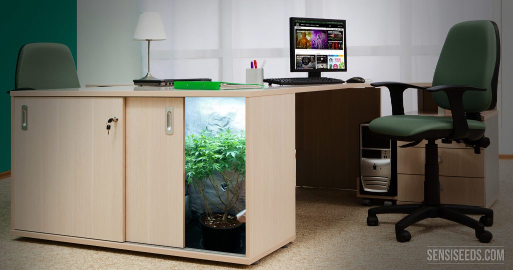 What is the difference between micro growing and regular indoor ...